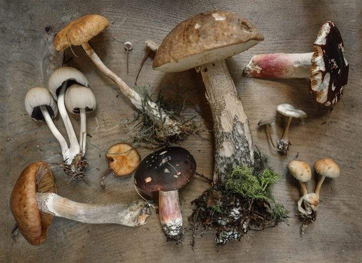 The Health Benefits of Medicinal Mushrooms: 4 Powerful Healing Fungi for Supercharging Your Health and Immunity